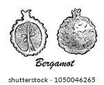 hand drawn illustration of...   Shutterstock .eps vector #1050046265