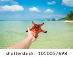 starfish in human hand on... | Shutterstock . vector #1050057698