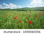 spring flowers poppy in meadow. ...   Shutterstock . vector #1050060356