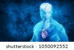 3d brain and heart representing ... | Shutterstock . vector #1050092552