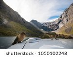 kia  the inquisitive new... | Shutterstock . vector #1050102248