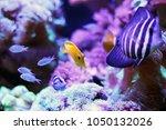yellow fish tank swimming in...   Shutterstock . vector #1050132026