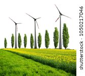 field of rapeseed with poplar... | Shutterstock . vector #1050217046