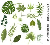 tropical leaves green jungle... | Shutterstock .eps vector #1050241715