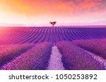 Violet  Lavender Bushes...