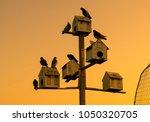birds early morning view | Shutterstock . vector #1050320705