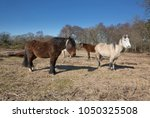 a small herd of wild and free... | Shutterstock . vector #1050325508
