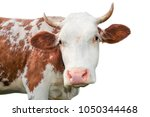 funny cow looking at the camera ... | Shutterstock . vector #1050344468