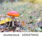 a poisonous mushroom in a... | Shutterstock . vector #1050370442