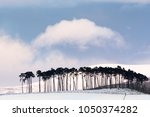 pines on the braes of abernethy ... | Shutterstock . vector #1050374282