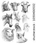 domestic  farm animals head...   Shutterstock .eps vector #1050400532