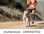 Stock photo dog and man taking part in a popular canicross race 1050467552