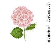 pink hydrangea flower with... | Shutterstock .eps vector #1050503828