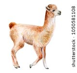 llama or alpaca hand drawn... | Shutterstock . vector #1050581108