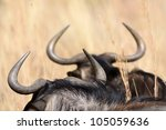 Wildebeest Horns