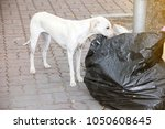 content in stray dogs and rabies | Shutterstock . vector #1050608645