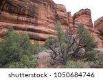 desert scene landscape agave... | Shutterstock . vector #1050684746