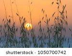 Golden Sunset Through Meadow...