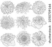 beautiful monochrome sketch ... | Shutterstock .eps vector #1050709166