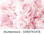 beautiful flowers  peonies.... | Shutterstock . vector #1050741476