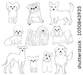 group of small dogs line art... | Shutterstock .eps vector #1050843935