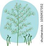vegetable garden and ornamental ... | Shutterstock .eps vector #1050937352