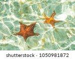 Two Sea Stars In Ocean   Star...