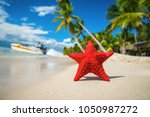 seastar or sea starfish... | Shutterstock . vector #1050987272