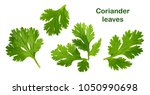coriander leaf isolated without ... | Shutterstock . vector #1050990698