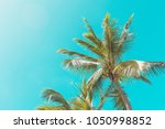green palm tree on the bright... | Shutterstock . vector #1050998852