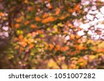 defocus of ebony flower tree in ... | Shutterstock . vector #1051007282