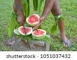 cook islander cuts watermelon...   Shutterstock . vector #1051037432