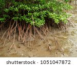 detail of the long  curved ... | Shutterstock . vector #1051047872