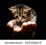 Stock photo cute kitten in hand 105106625