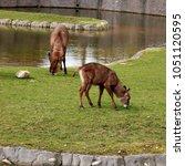 Small photo of ellips waterbuck in a safari park