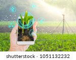 growing young maize seedling in ... | Shutterstock . vector #1051132232