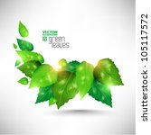 modern green fresh leaves... | Shutterstock .eps vector #105117572