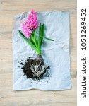 spring flowers on wooden   Shutterstock . vector #1051269452