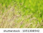 green background from grass...   Shutterstock . vector #1051308542