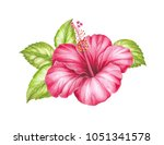single troical hibiscus flower. | Shutterstock . vector #1051341578