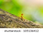 Red ant in green nature or in the garden - stock photo