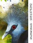 Small photo of red eye blue bird Sri Lanka