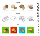 hazelnut  pistachios  walnut ...   Shutterstock .eps vector #1051384562