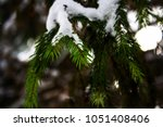 needles at the christmas tree... | Shutterstock . vector #1051408406