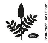 sumac. plant. inflorescence ... | Shutterstock .eps vector #1051411985