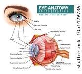 human eye anatomy infographics... | Shutterstock .eps vector #1051429736