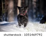 labrador retriever jumping... | Shutterstock . vector #1051469792