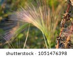 stem of a plant on a blurred... | Shutterstock . vector #1051476398