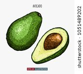 hand drawn avocado isolated.... | Shutterstock .eps vector #1051489202