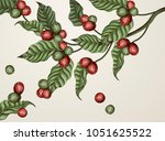 engraving coffee plants ... | Shutterstock .eps vector #1051625522